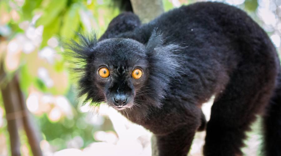 Incontri con i lemuri