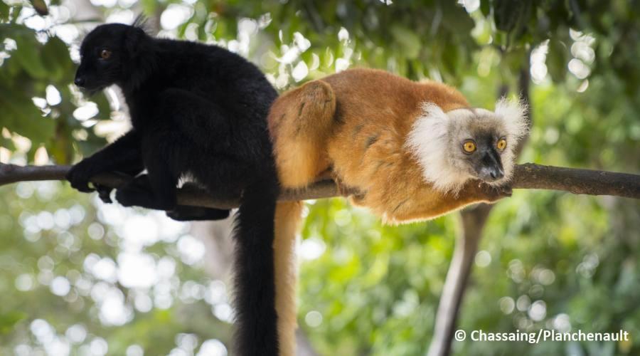 Incontro con i lemuri