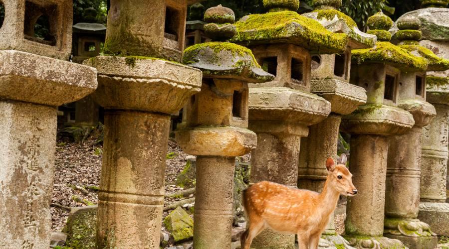 Nara - Santuario di Kasuga