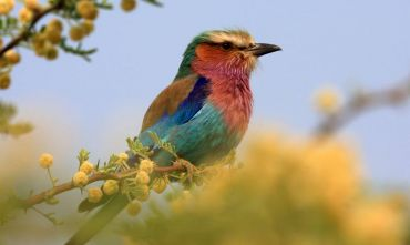 la nazione arcobaleno