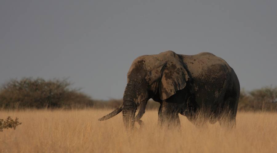 elefante nel Kruger