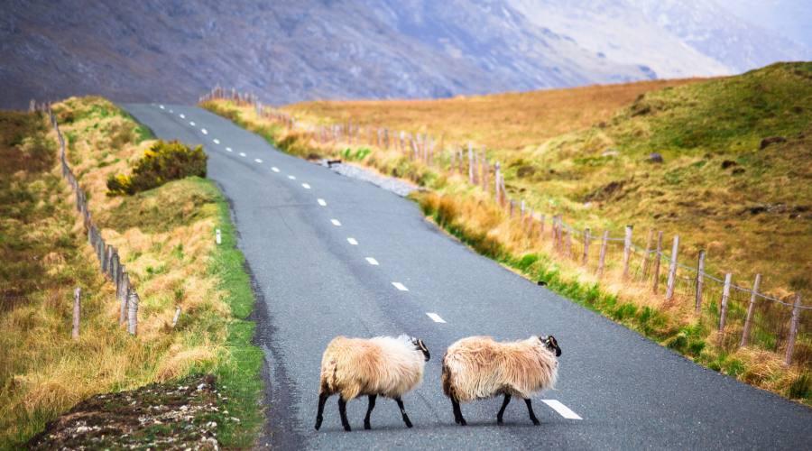 Strada nel Connemara