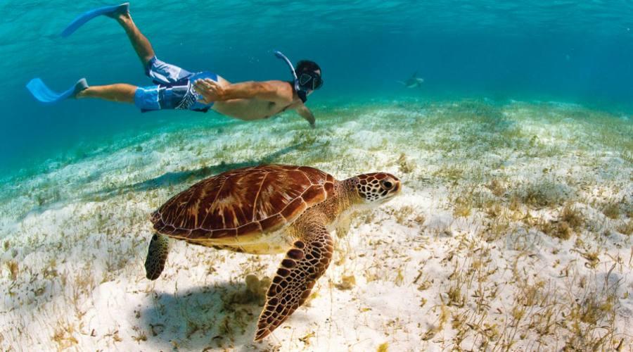Diving alle Seychelles