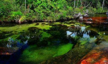 Tour Adventure Nature: da Caño Cristal all'Amazzonia!