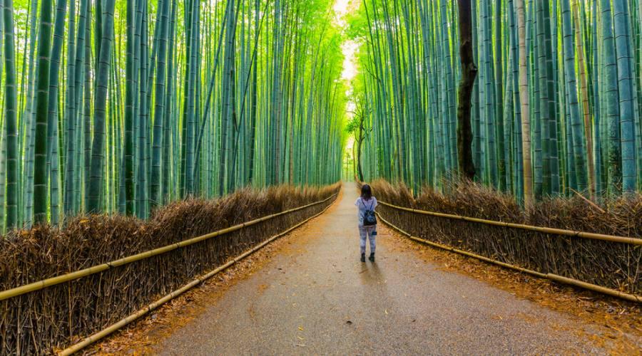 La foresta di bambu' di Arashiyama