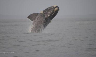 Fly and Drive alla Scoperta delle Balene - Malaria Free