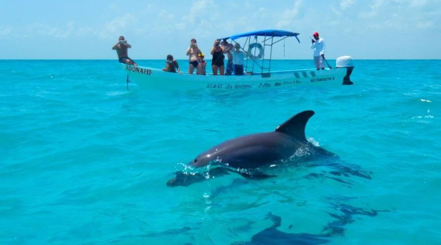 Escursioni: Delfini,Tartarughe e Dugonghi nella Biosfera di Sian Ka'an