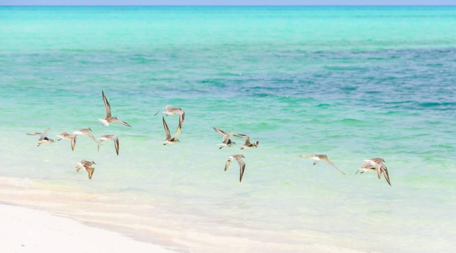 Cayo Levisa, paradiso per le immersioni