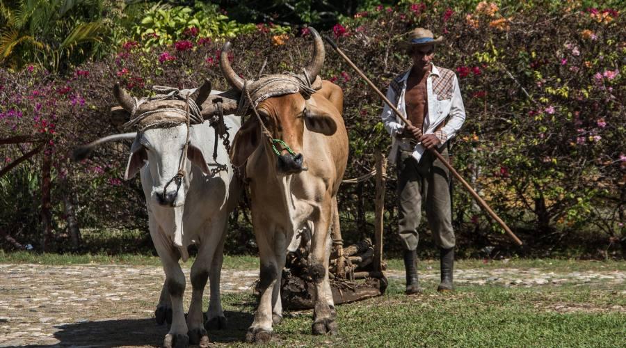 Campagne e agricoltura a Cuba