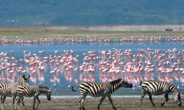 Safari parchi del Nord e Isola di Mafia
