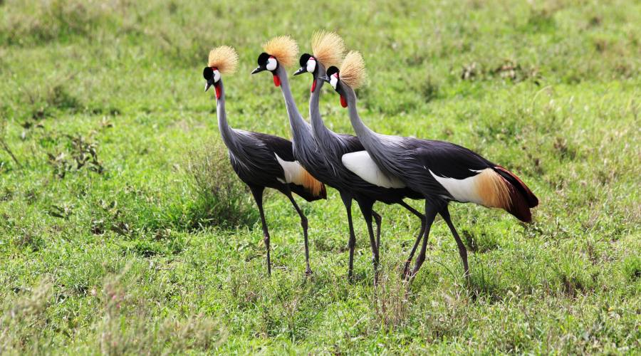 Animali unici della Tanzania