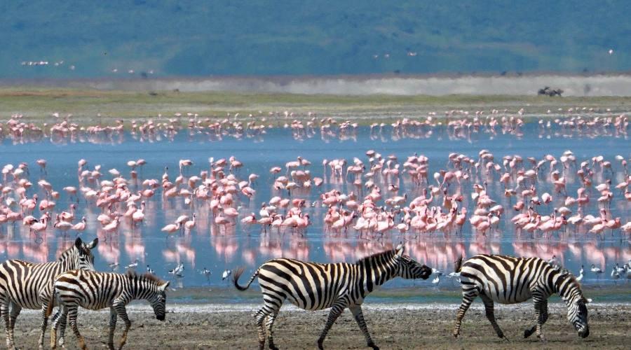 Fenicotteri e il loro habitat