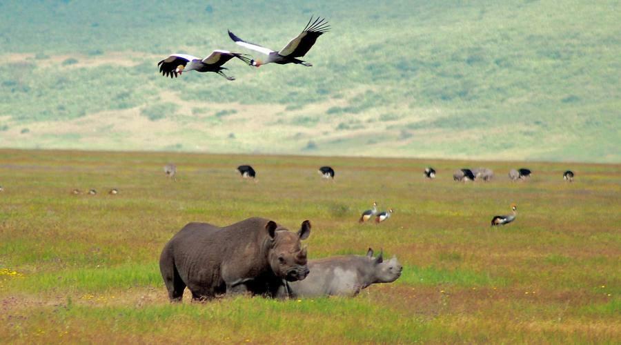 Rinoceronti nel prato