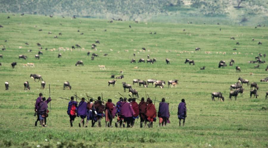 Controllo del gregge dai pastori locali