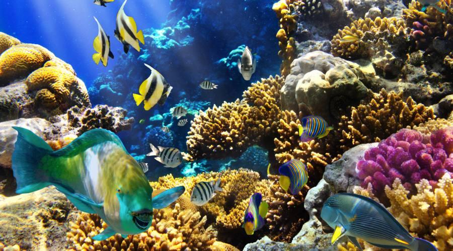 Bariera Corallina e le vita marina