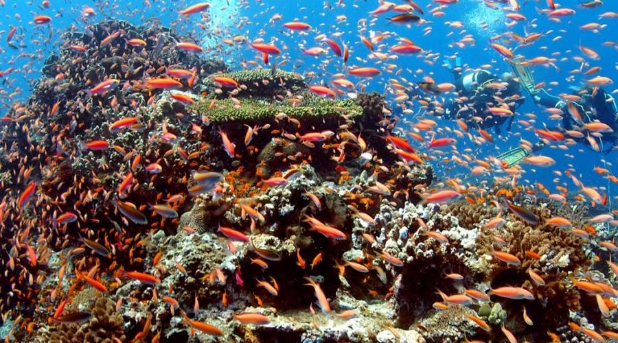Bariera Corallina