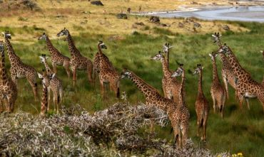 Safari Tanzania e Isola di Pemba