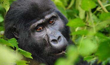 Lo Sguardo del Gorilla - Tour di gruppo 2019