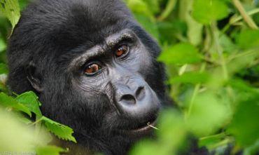 Lo Sguardo del Gorilla - Tour di gruppo a data fissa 2020