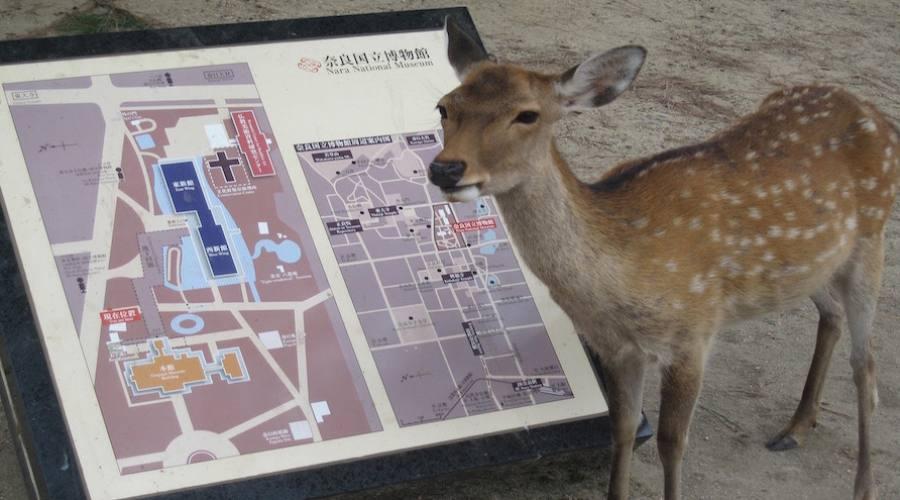 Nara- Il Parco dei cervi