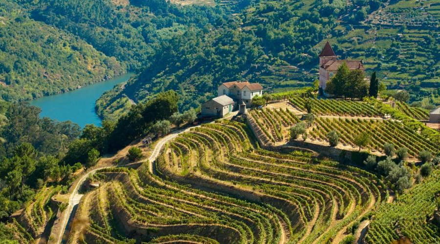 Vigneti, valle del Douro