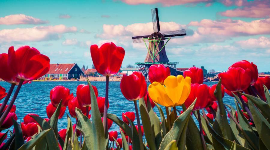 Colori d'Olanda