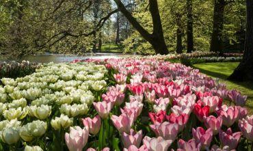 Intrigante crociera dei tulipani per i ponti di primavera