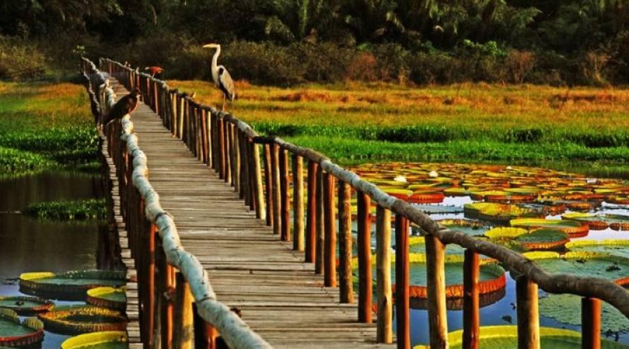 Tour Pantanal Completo e Chapada dos Guimarães: Victoria Regia