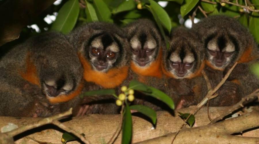 Tour Pantanal Completo e Chapada dos Guimarães: macaco di notte