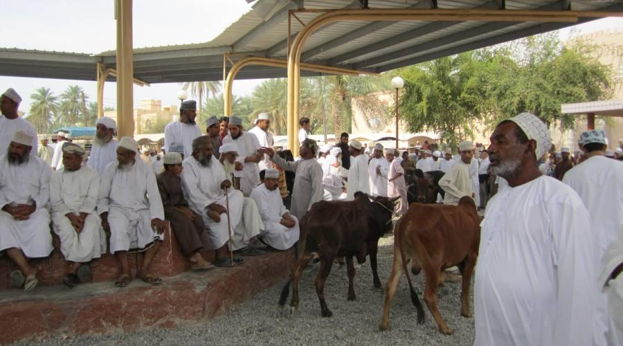 Nizwa- Mercato  del bestiame
