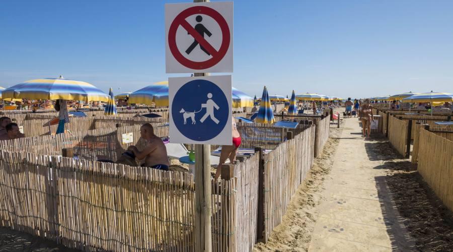 Bagnio 81, Rimini dog no problem.
