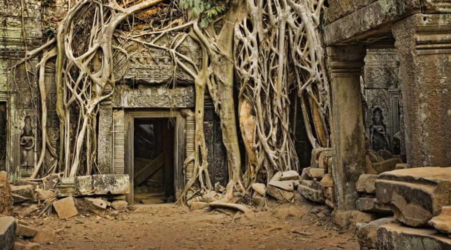 Particolare del tempio Ta Prohm ad Angkor Wat