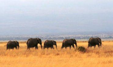 I più bei parchi naturali dell'Africa Orientale e la leggendaria Etnia Masai!