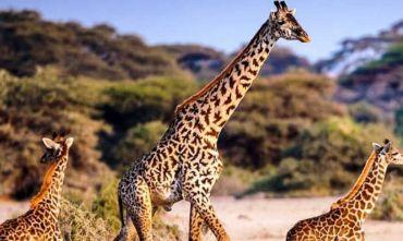 Safari e soggiorno mare nella favolosa Zanzibar!