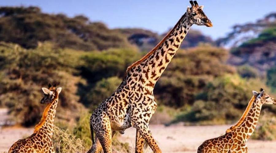 Parchi del Nord - Tanzania