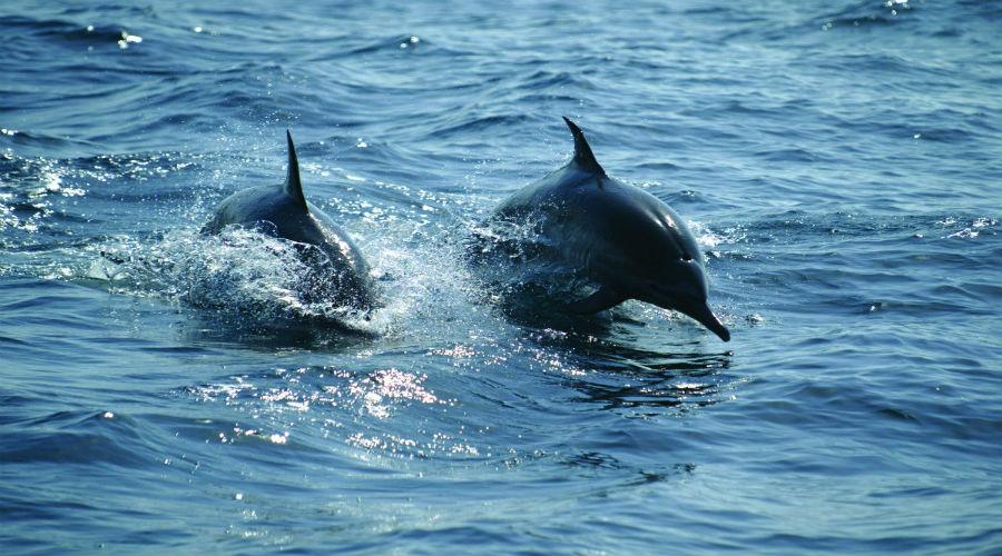 Delfini e diving