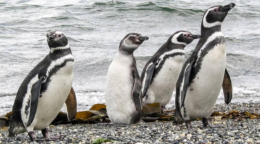 6° giorno: Pinguini a Isla Martillo