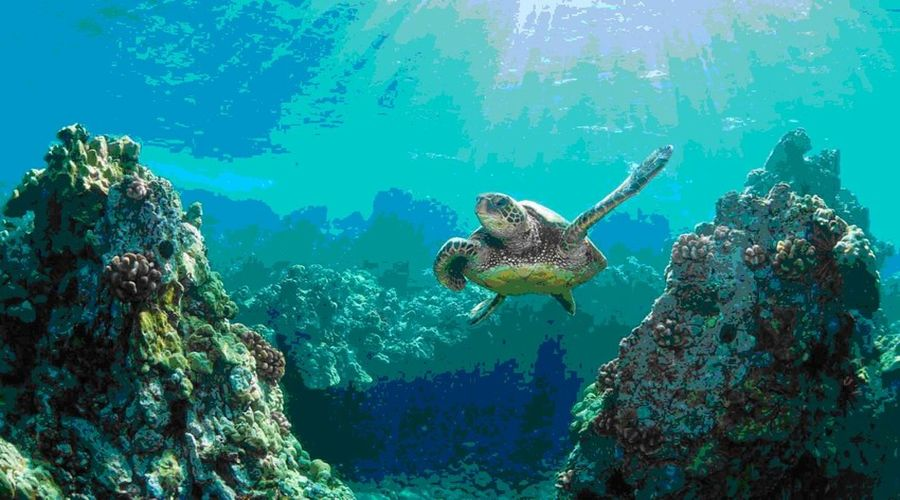 Visite alle barriere coralline