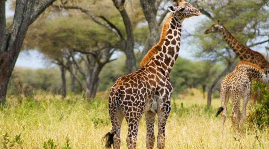 Animals in Ngorngoro Park