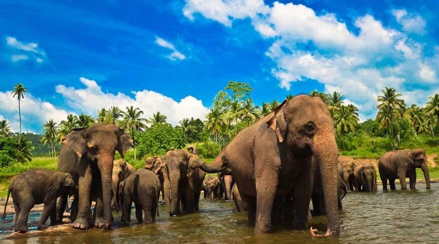 Polonnaruwa: orfanotrofio degli elefanti