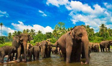Gran Tour del Regno di Ceylon