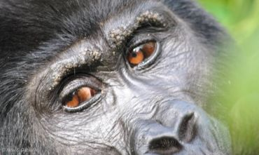 Lo Sguardo del gorilla - Tour individuale 2019