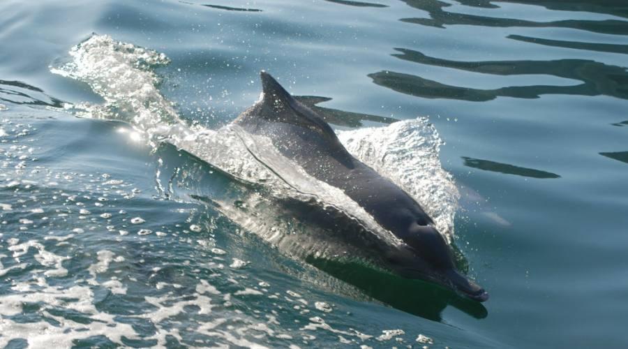 Delfini tra i fiordi