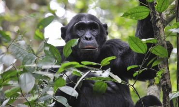 Speciale Pasqua alla Scoperta dello Sguardo del Gorilla - 10 Aprile 2020