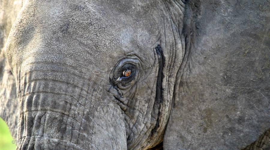 Particolare di elefante