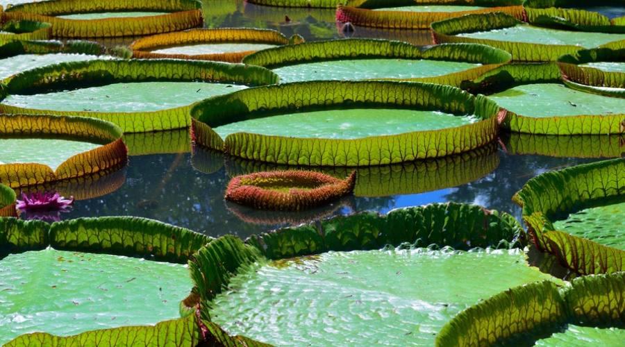 Giardini di Pamplemousses
