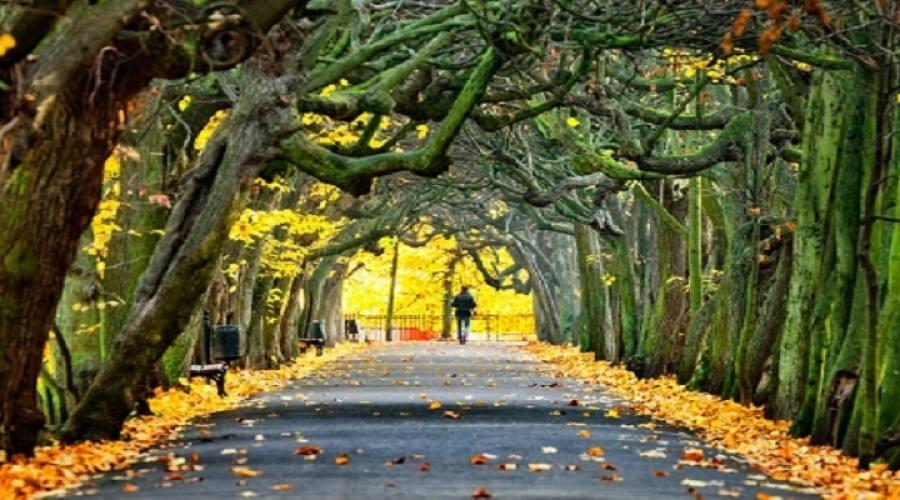 Parco di Cracovia