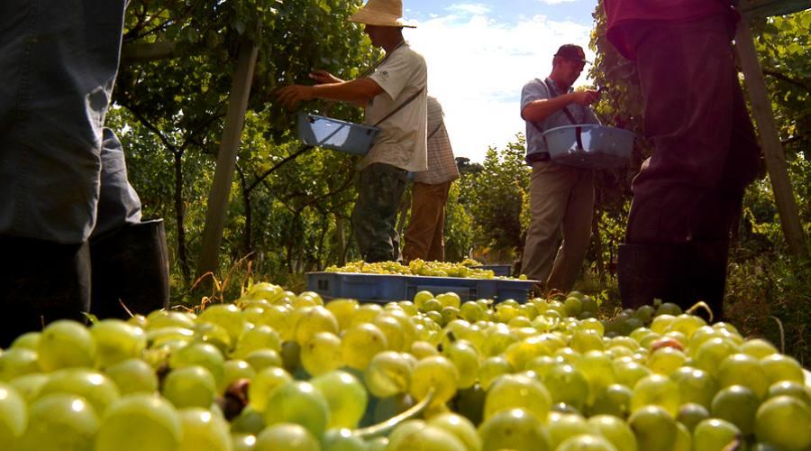 Tour Eno-gastronomico: La Rotta dei vini sulle colline di Bento Gonçalves
