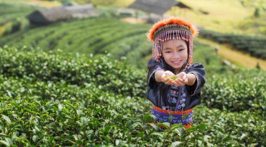 Bimbo in un campo di te' a Chaing Mai