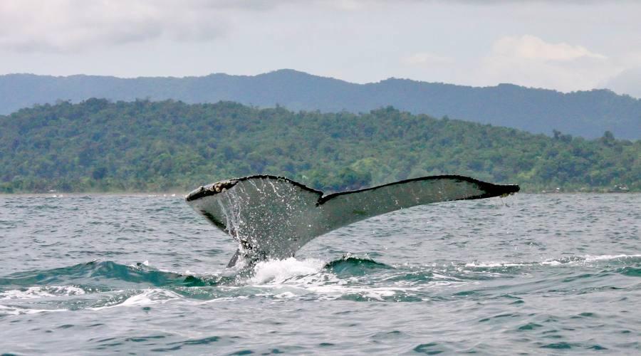 Tour e Pacifico Colombiano con avvistamento delle Balene